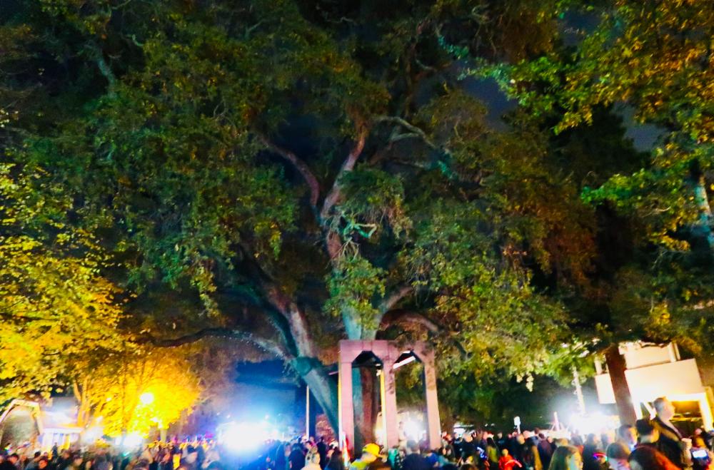 lighting of the old oak tree danville ca