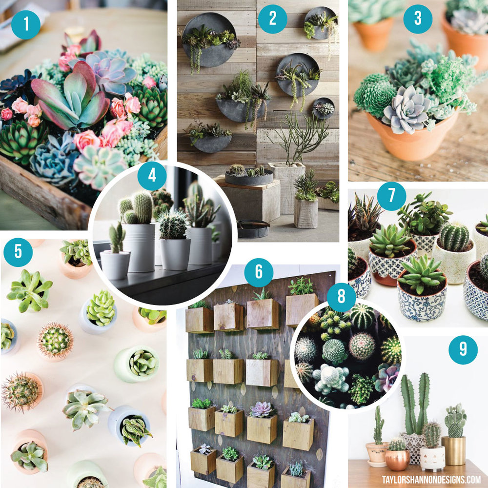 1) colorful succulents   2) awesome wall garden   3) potted succulents   4) potted cacti   5) aerial succulent view   6) rustic succulent wall   7) pretty blue and white pots   8) lots of cacti and succulents   9) cacti in assorted pots