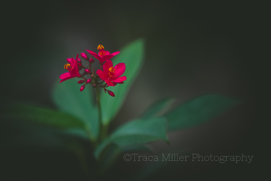 Rockport TX Photographer