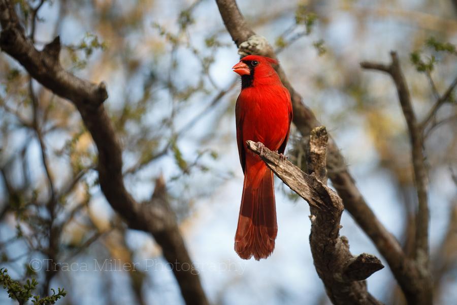 Rockport TX Bird Photography Aransas County