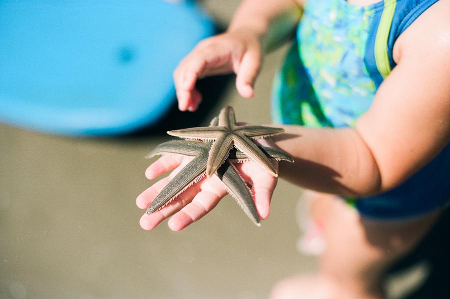 16/365 - Starfish