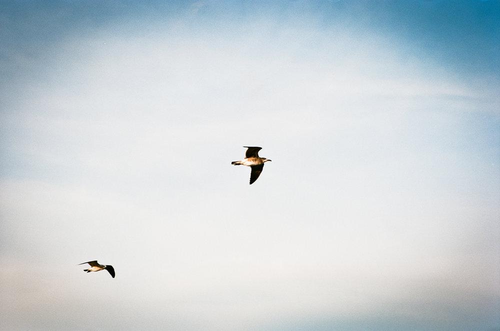 65/365 - Gulls Kodak Ektar 100
