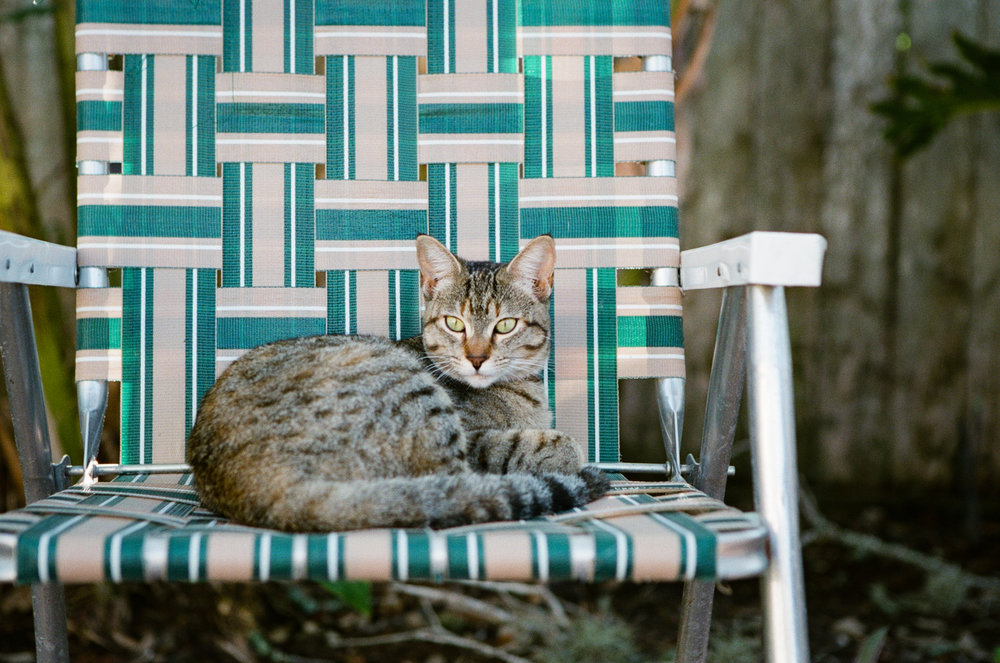 93/365 - Leia and Lawn Chair 50mm, f/3.5, 1/160th sec, Fuji 400H