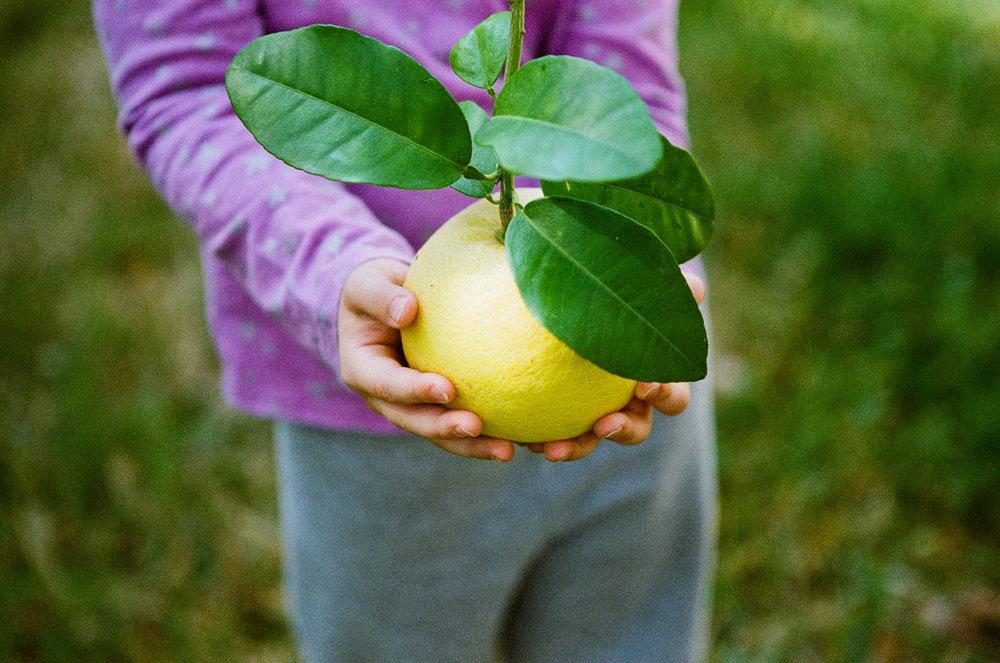 105/365 - First Fruits 70mm, f/2.8, 1/2000th sec, Fuji 400H @1600