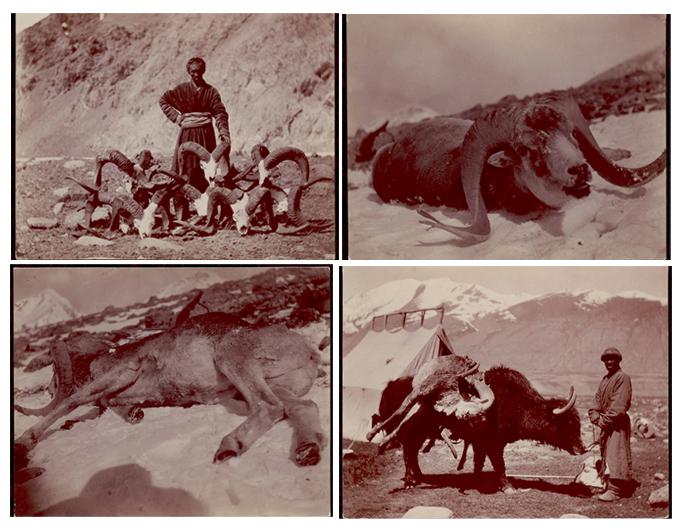 Kirghiz Hunters late 19th Century Wakhan Corridor