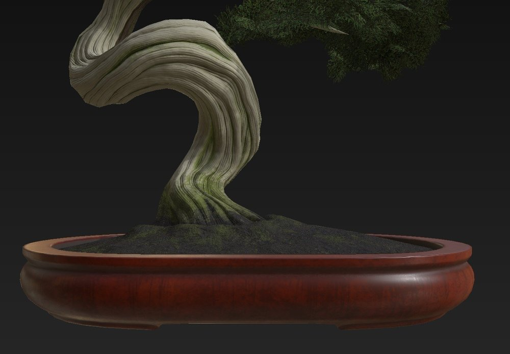 Bonsai_Tree_09.jpg