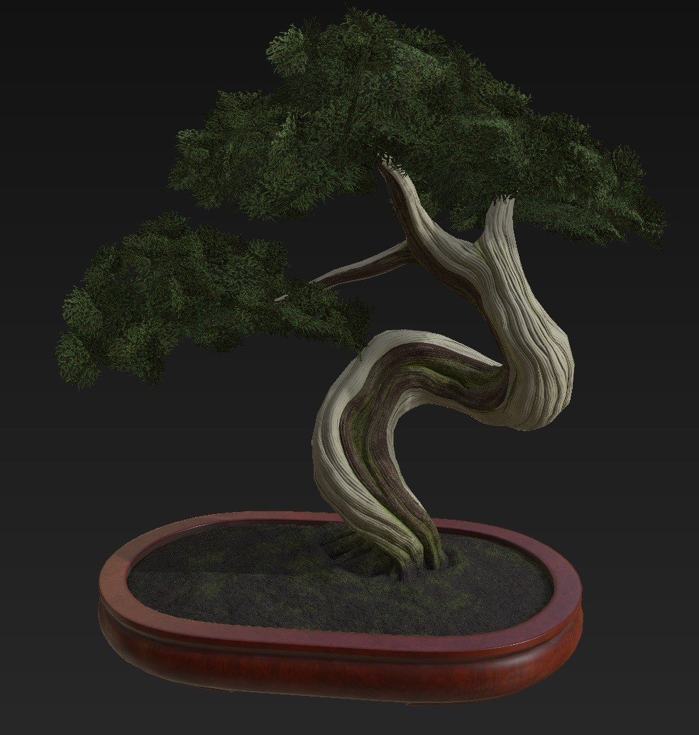 Bonsai_Tree_13.jpg