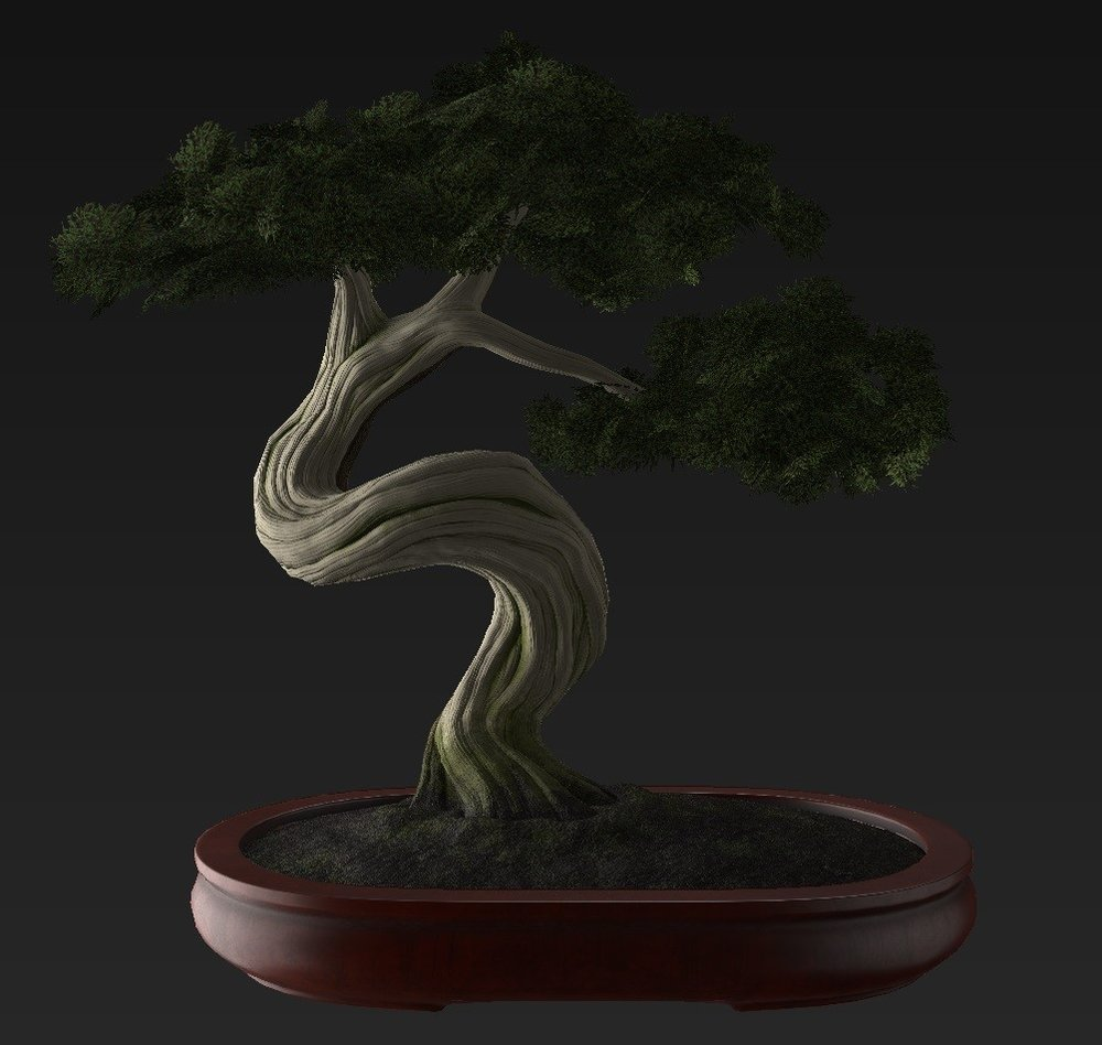 Bonsai_Tree_27.jpg