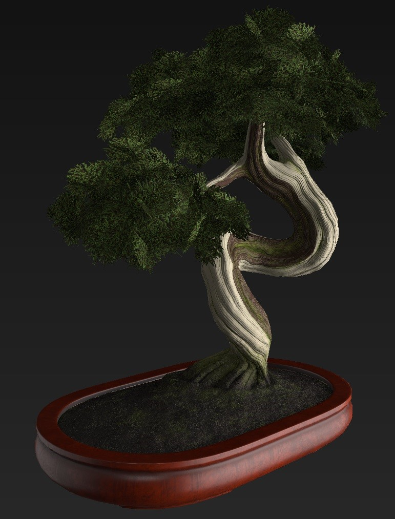 Bonsai_Tree_29.jpg