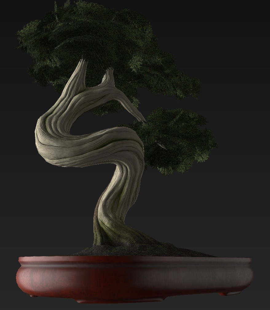 Bonsai_Tree_38.jpg
