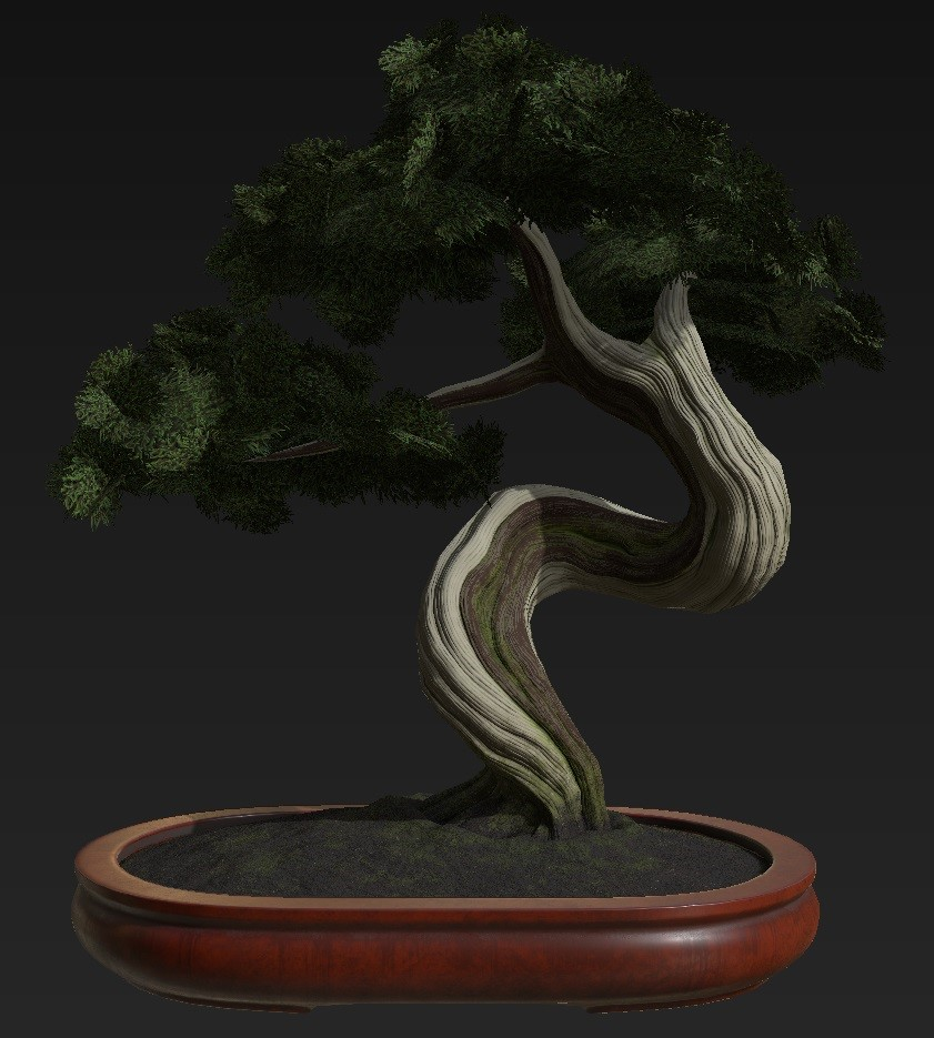 Bonsai_Tree_41.jpg