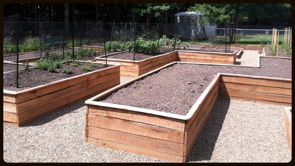 Raised vegetable garden planter boxes constructed with locust lumber