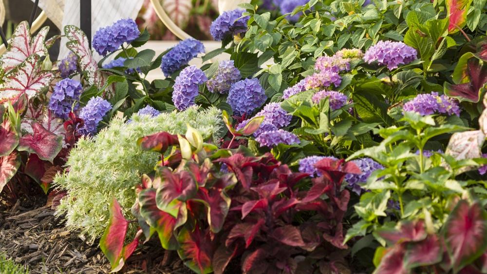 B B Barns Ashevilles Premier Garden Center and Landscape Company – Plants for Garden