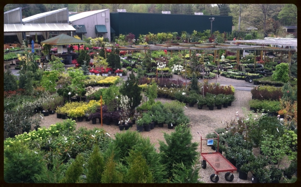 Elevated view of our Garden Center outdoor plant area