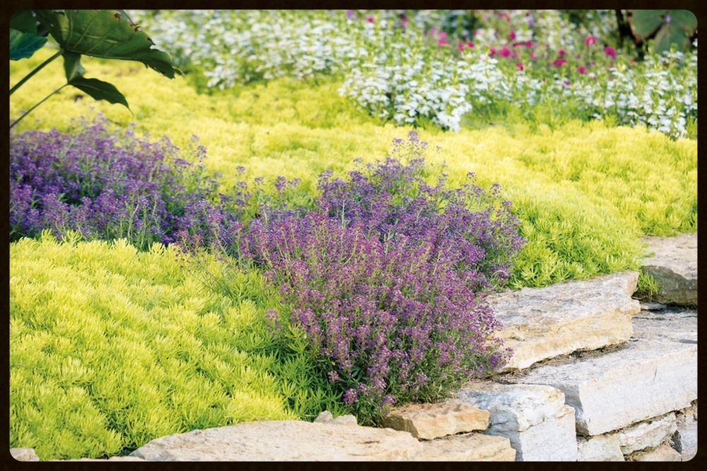Mixed groundcovers and perennials behind stacked stone wall