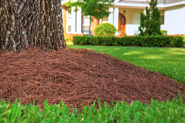 Pine straw mulch is more common in the south