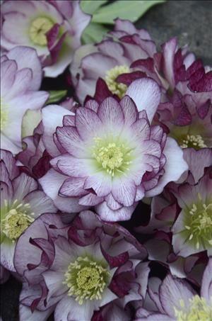 'Blushing Bridesmaid' Wedding Series (Photo credit:Walter's Gardens.)