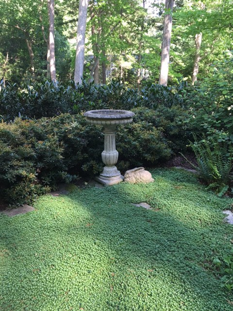 A birdbath can be the combination, paired here with Chinese evergreen sedum. (Garden of Jan Cantrell, Biltmore Forest.)