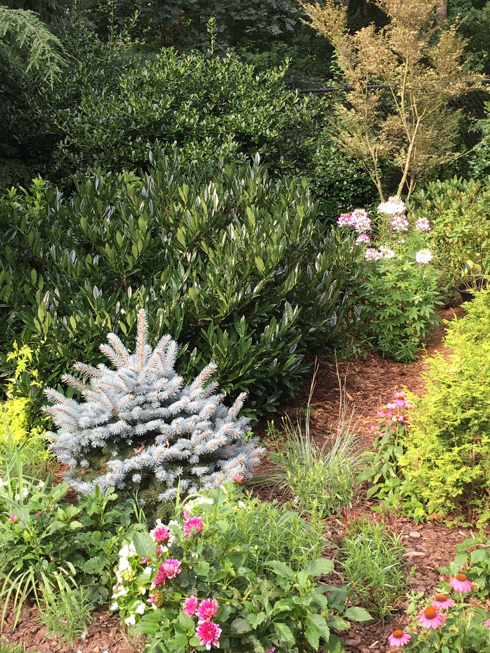 Evergreen trees and shrubs mix with perennials perfectly.