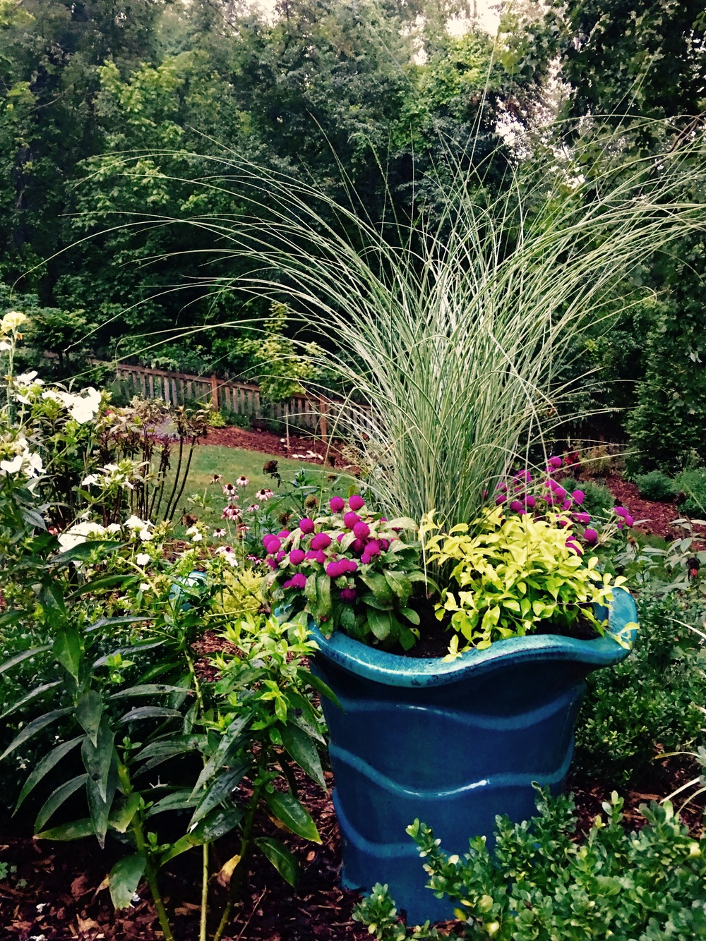 Containers in a young or old garden help add height, color, shape and texture to the garden. The miscanthus grass is a great choice to add movement to the garden.