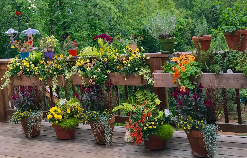 Container garden on the back deck.