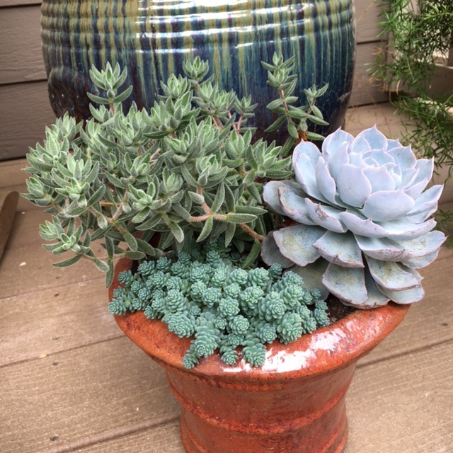 Succulent pot fits perfectly with the pot behind it. Nancy considers the style of pots when she is doing container gardens.
