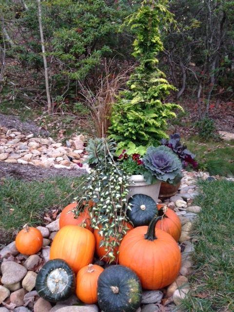 We'll end with some fall inspiration. A great fall/winter container with pumpkins. The container will last long past the pumpkins, allowing you to add holiday interest to it.