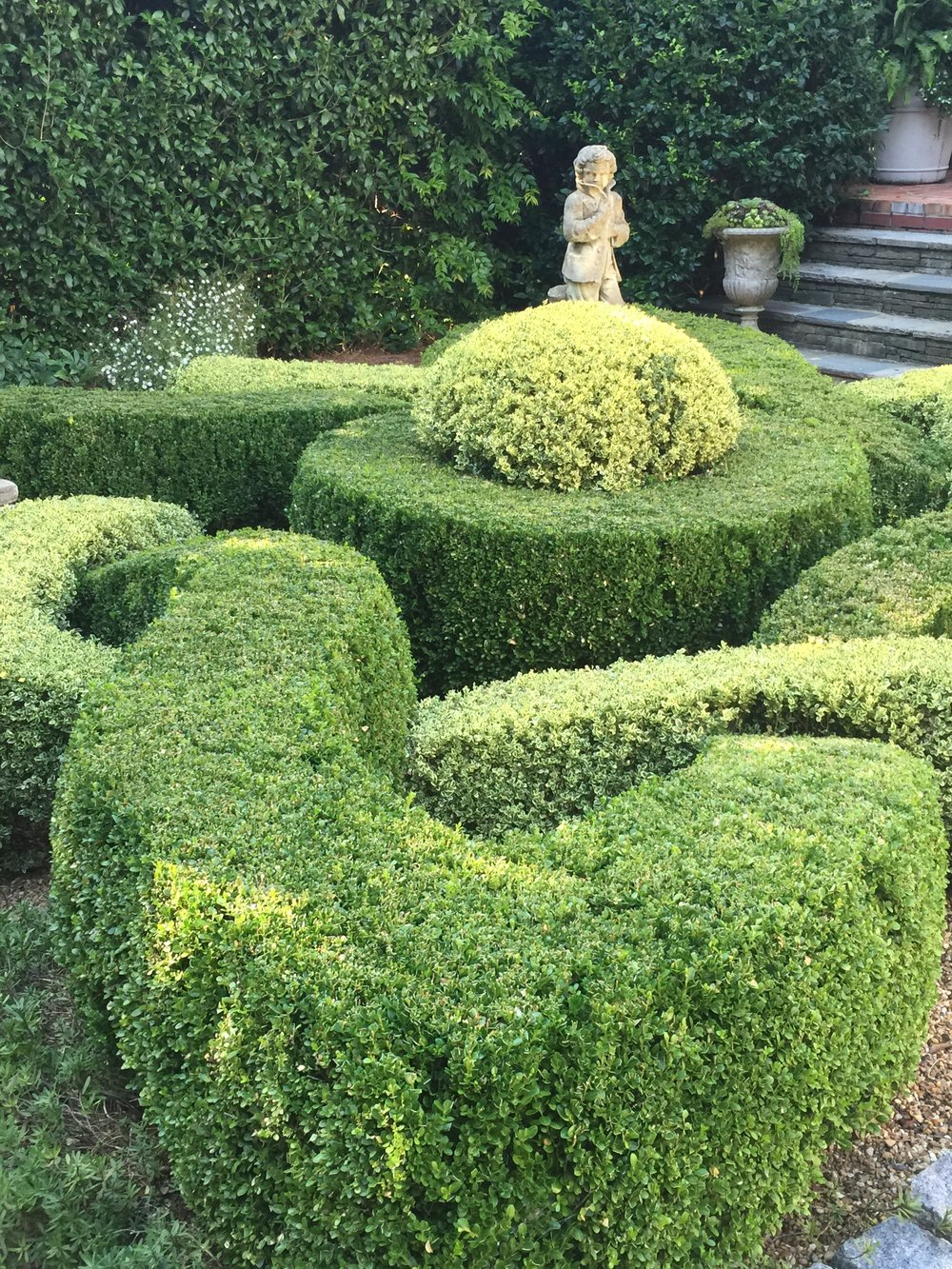 Variegated boxwood.