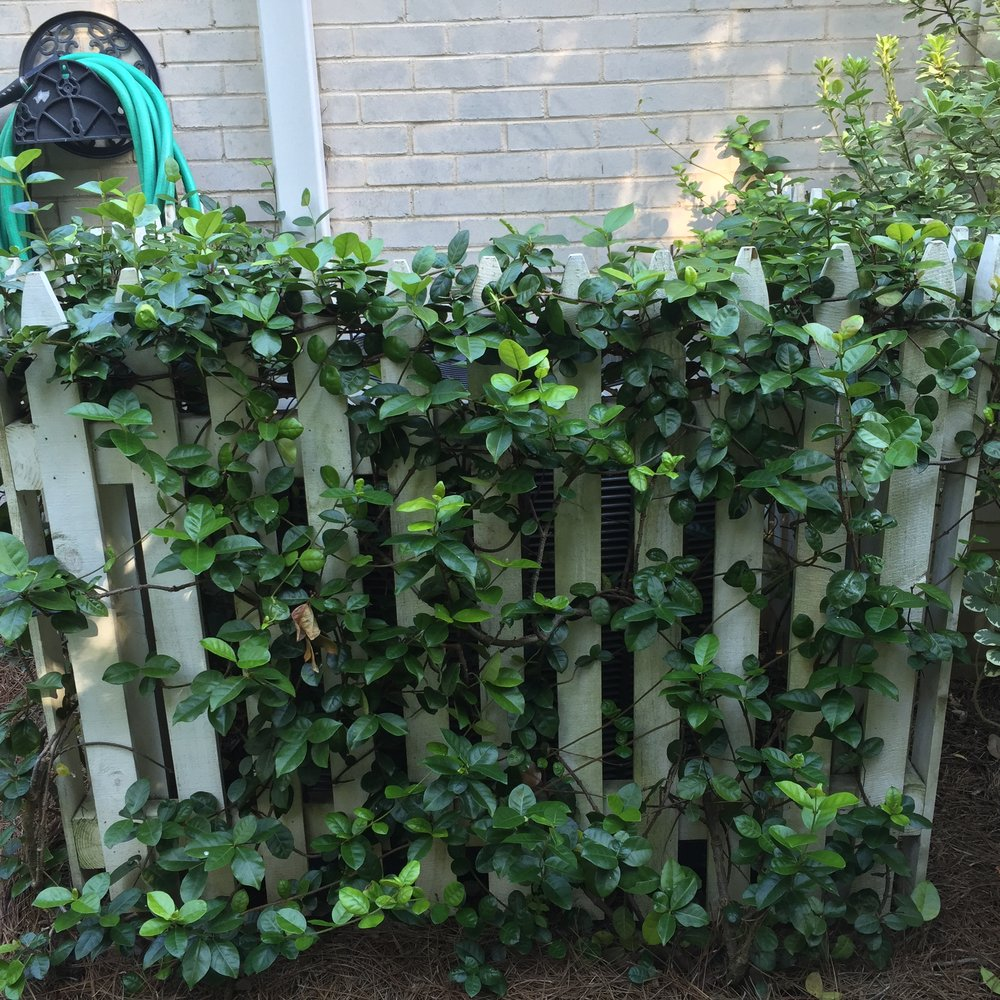 Picket fence and vines for covering the hvac unit.