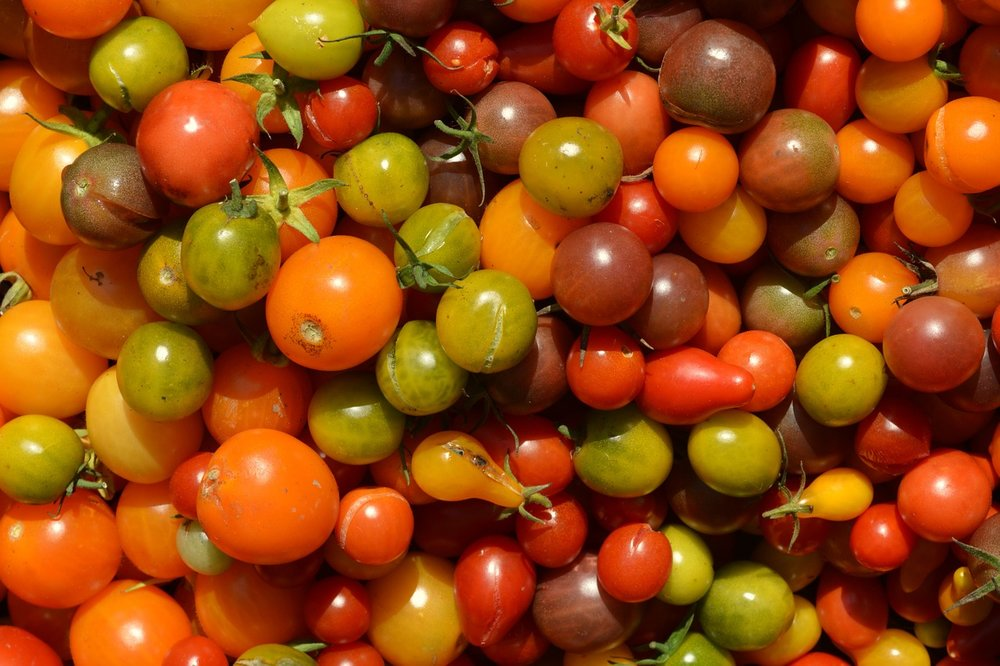 Tomatoes are a must, though wait to start them since their plant date is not until night temperatures are consistently  above 50 degrees.
