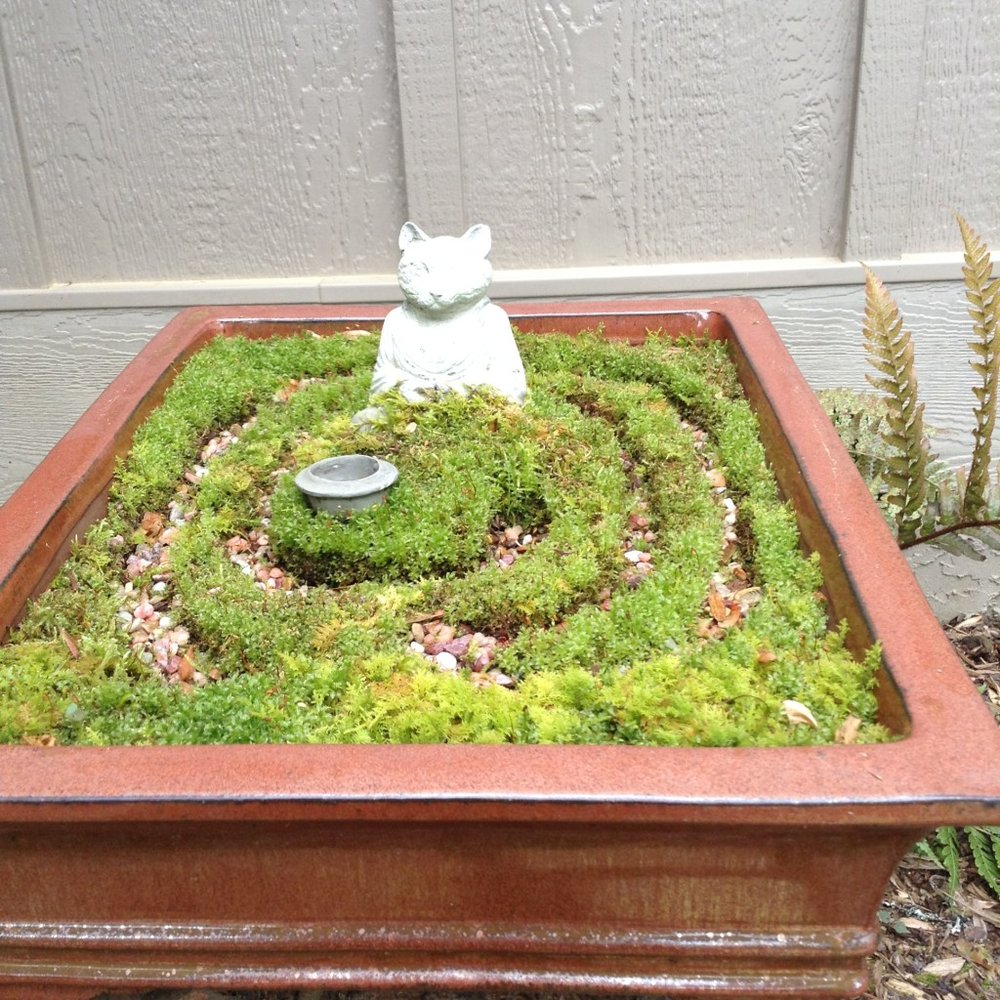 Labyrinth container done with sedum, moss and pebbles.
