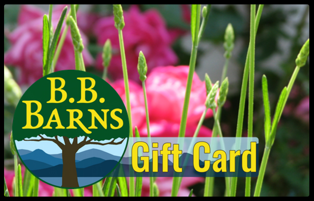 Click the image to purchase a gift card!