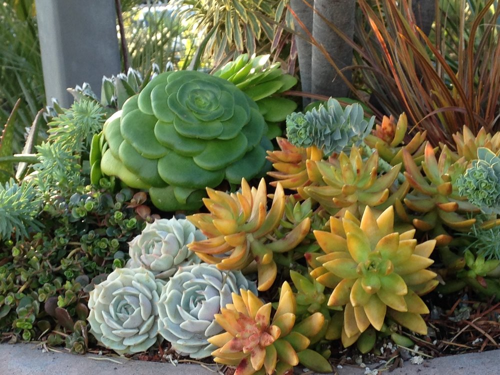 Agave, echeveria, coppertone stonecrop and sedum 'Dragon's Blood' and firesticks euphorbia in this container.