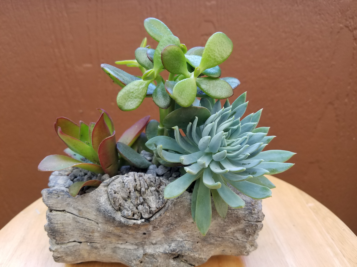 Make N Take Indoor Succulent Gardens For Your Home Part Ii