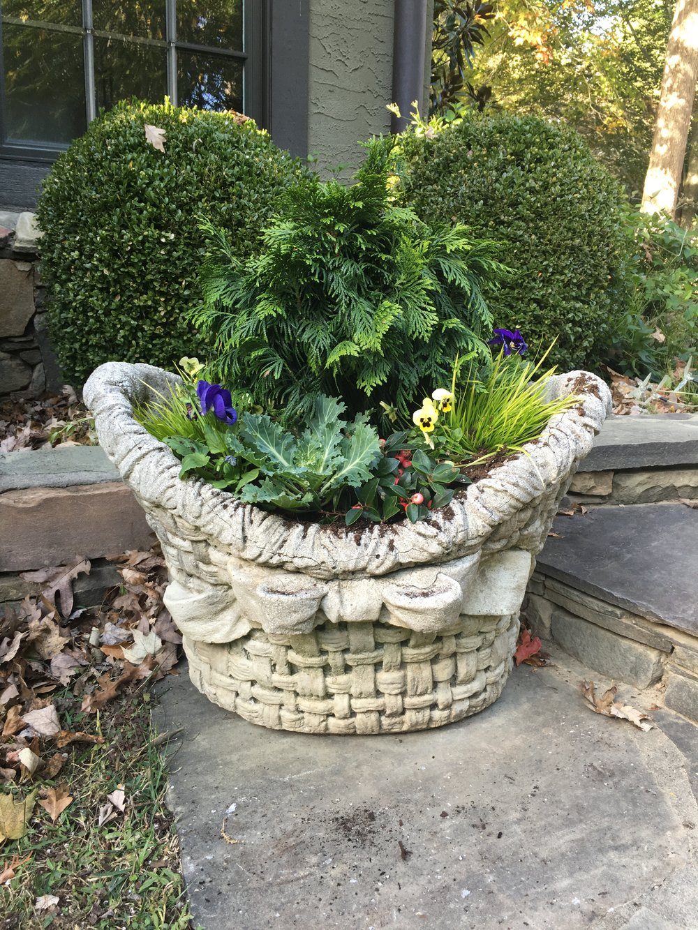 Concrete containers come in all styles from fun to traditional. They're easy to plant in winter, adding evergreen conifers and grasses with a few pansies for added color.