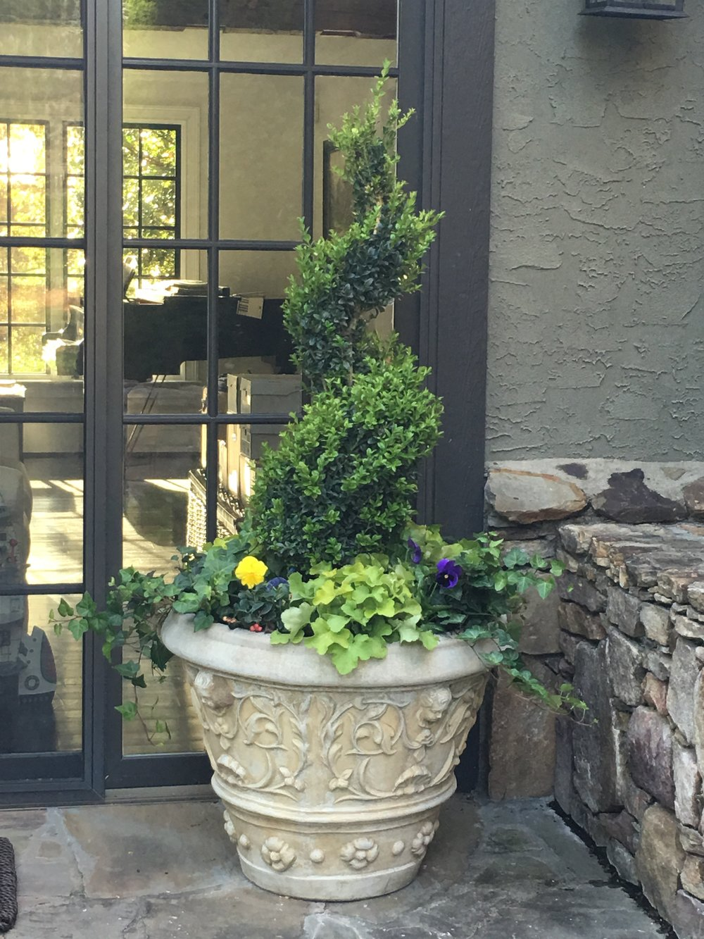 A winter garden in a concrete container. Concrete pots can stay out all winter, and look best if you plant them. In this pot are evergreen boxwoods, evergreen 'Cintronelle' heuchera and evergreen ivy. The pansies will die back but show again in spring.