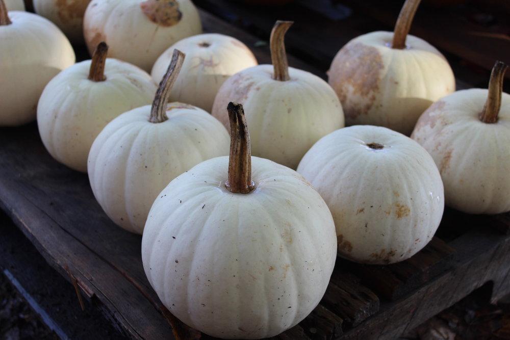 Ghost or Lumina pumpkins.