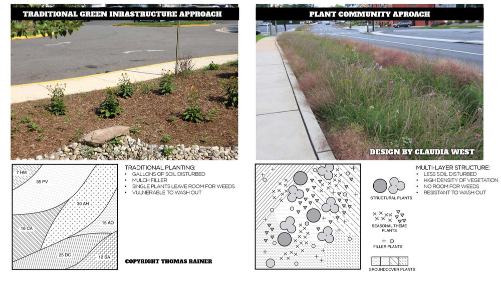 "To the left is a traditional planting design. It is tidy, and typical, but lacking in the lushness our eyes prefer, requiring a lot of maintenance, seasonal work, mulch, and is vulnerable to wash out. The design on the left uses a ""plant community"" design that disturbs less soil, maintains a high density of vegetation, leaving little room for weeds, and less chance of wash out.   Claudia West  , a principal at Phyto Studio is responsible for this design. (Photo credit: Thomas Rainer)"