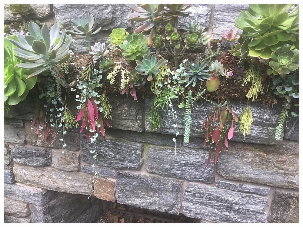 Even a mantle works. (Picture by Barney Bryant, Chanticleer Gardens.)