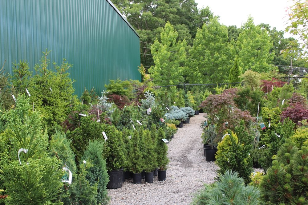 conifer garden center.jpg