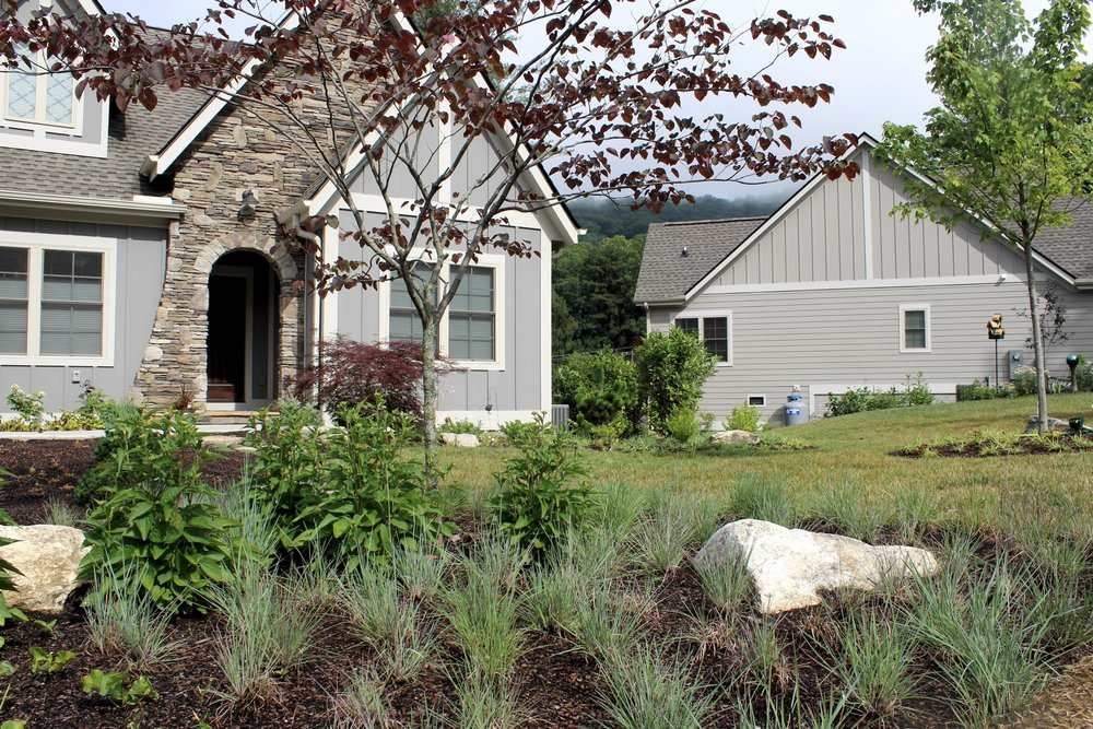If you refer to Nies' design above, you see the use of plugs to create a more naturalized planting with grasses in the foreground of this picture (Little Blue Stem or   Schizachyrium schoparium ). A native grass that is drought tolerant and beautiful in every season, it will eventually fill in the mulched area, reducing the need for mulch and giving visual appeal all year (the grasses can be left through winter for interest, cutting back in late spring). In front of the grass (not seen in picture) is a groundcover called Green and Gold, or   Chrysogonum virginianum var. Australe  .  For seasonal theme, the Rudbeckia 'Goldstrum' is behind the grasses.