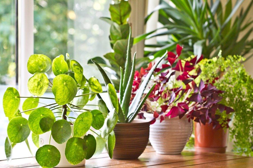 houseplant_design.jpg