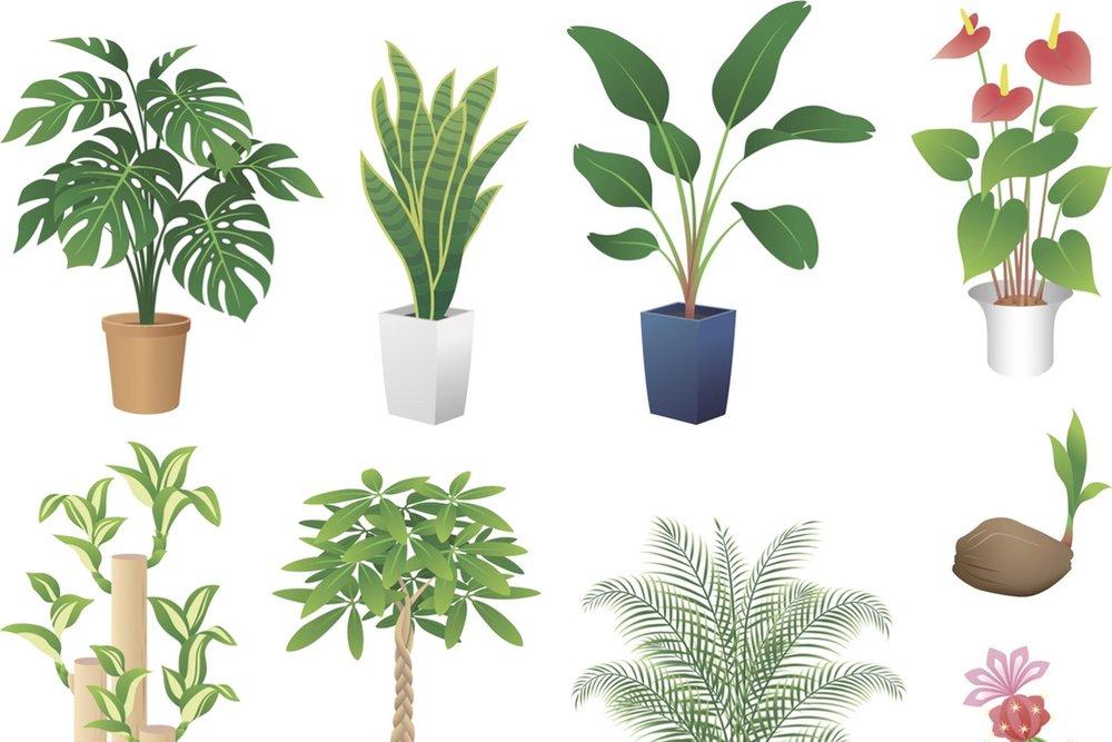 tropicals_vector.jpg