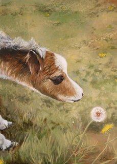 foal-in-awe-320.jpg