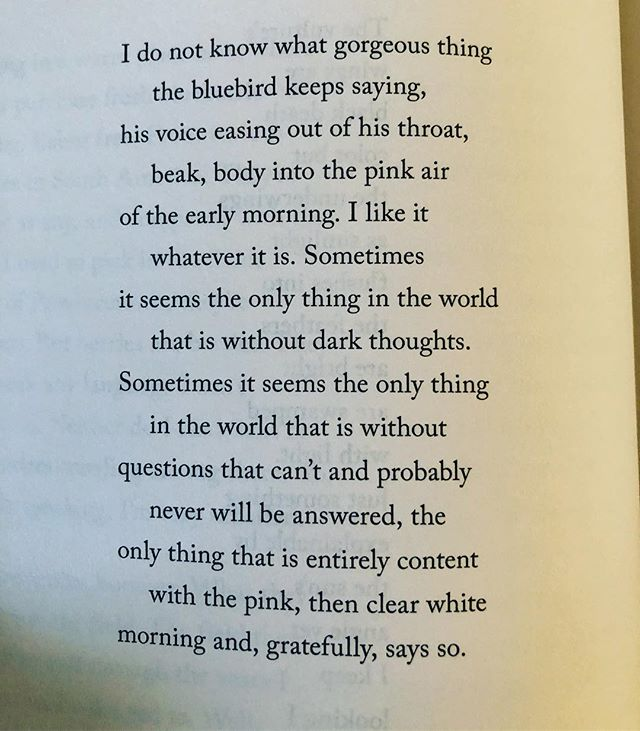 if you are resting in anywhere near the amount of peace you've offered me, mary oliver, you should be all kinds of set.