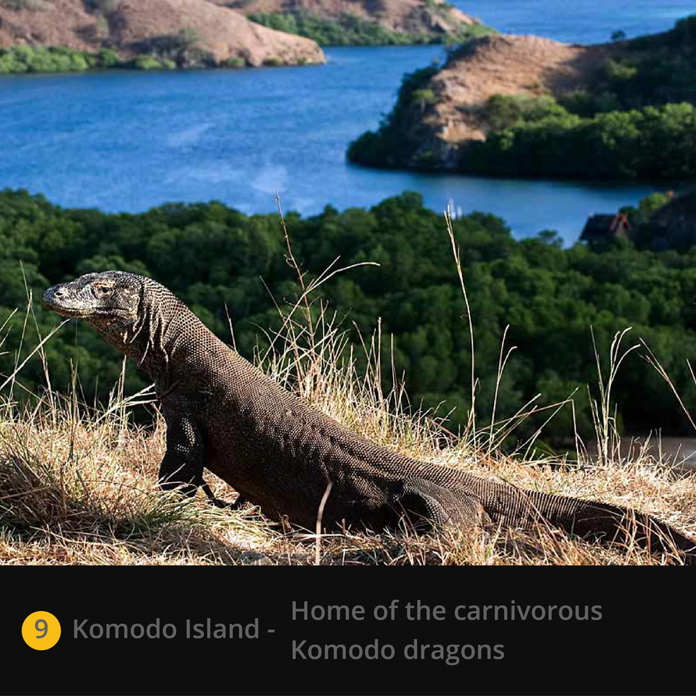 Komodo Island.jpg