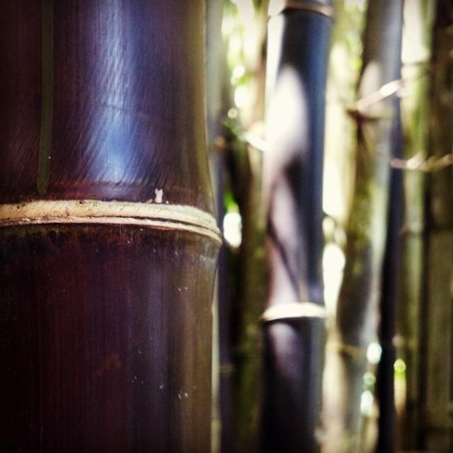 bamboopic.jpg