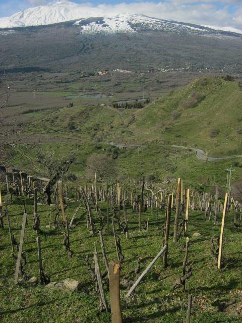 Monte Colla vineyard