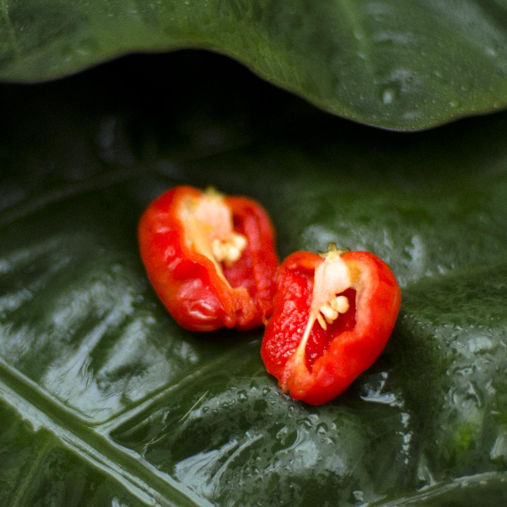 chile panameño 3