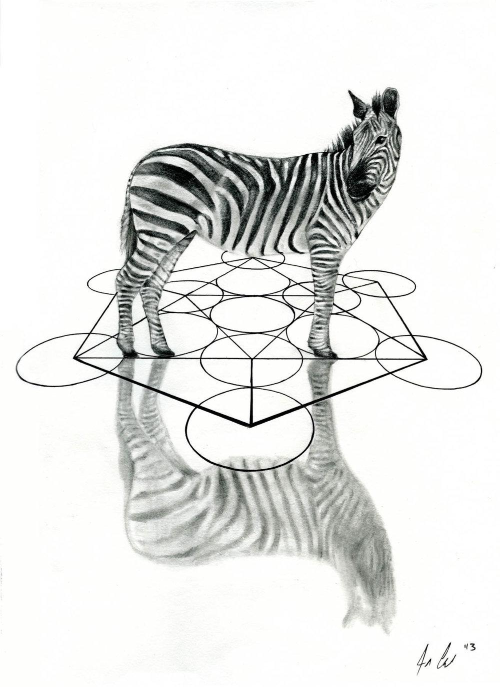 a-h---zebra.jpg